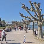 Sonntagmittag an der Rheinpromenade: Trotz Coronavirus und Kontaktsperre genießen Spaziergänger Sonne und frische Luft. Foto: BilderKartell/Andreas Stumpf