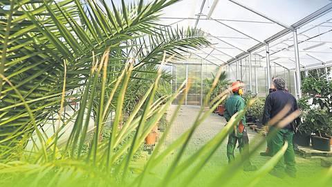 Uberwinterungsservice Fur Exotische Pflanzen