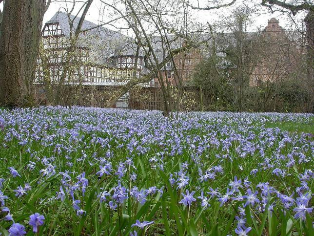 Botanischer Garten Giessen Offnet Am 20 Marz Seine Pforten