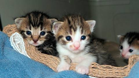Katzenbabys gibt es immer reichlich im Tierheim.  Foto: Birgit Schönig