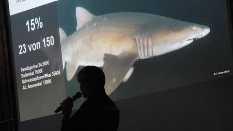 Zum Projekt Shark City gibt es in Pfungstadt viele Diskussionen.  Foto: Karl-Heinz Bärtl Diskussion