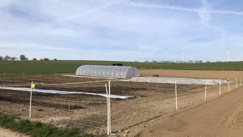 Auf rund 5000 Quadratmetern betreibt die Flomborner Initiative ökologische, solidarische Landwirtschaft. Foto: Bastian Hauck