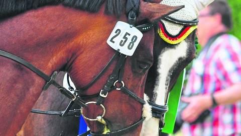 Schmusen ist unter Pferden momentan nicht angesagt: Das Herpesvirus verbreitet sich über Tröpfchen-Infektion. Foto: Eva Schaab