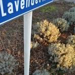 Aus dem Dorf mit der Lavendelallee könnte ein Lavendeldorf werden. Foto: Heidi Sturm