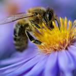 Ist das Insektenschutzgesetz verhältnismäßig? Foto: dpa