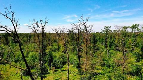 Folgen des Klimawandels in Darmstadt: ein sterbender Westwald...   Archivfoto: Andreas Kelm