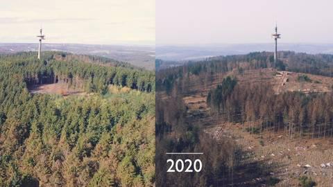 Der Baumbestand auf der Hohen Wurzel im Vergleich im Jahr 2019 (links) und nur ein Jahr später mit deutlichen Lücken. Fotos: Fink und Fuchs