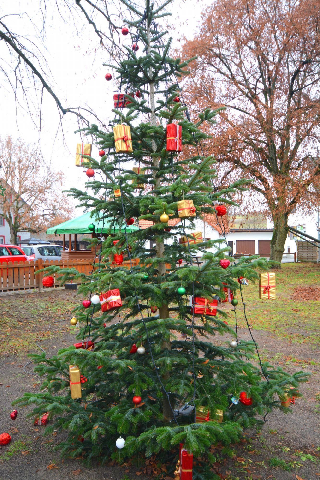 Weihnachtsbaum Selber Schlagen Sauerland.Tannenbaum Aus Taunusstein