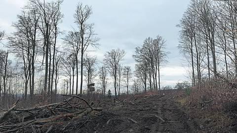 Nicht zu übersehen sind die Schäden im Schlangenbader Gemeindewald. Zuschüsse sollen helfen, den Wald klimastabil aufzuforsten. Archivfoto: Hakan Günder
