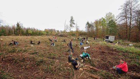 Die erste Pflanzaktion im November vergangenen Jahres. Am Ende des Tages waren 3000 Bäume in der Erde.  Foto: Reichel