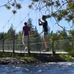 Der Vindelälven-Fluss bahnt sich mit vielen Stromschnellen seinen Weg. Foto: Anna Tillmann  Foto: Anna Tillmann