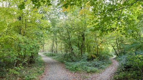 In dem Waldstück an dieser Weggabelung soll der Funkmast gebaut werden. Links ist der Weg zur Heinrich-Delp-Straße zu sehen, rechts der Pfad zum Elfengrund.  Foto: Torsten Boor