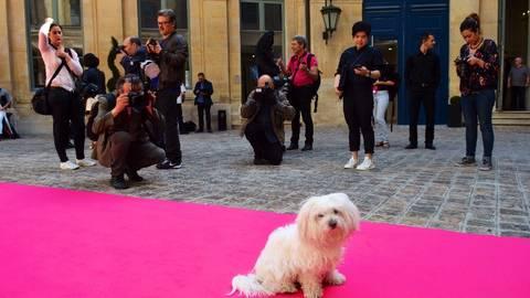 Fashion Week in Paris mit Fleurchen auf dem pinkfarbenen Teppich. Foto: Anja Kossiwakis