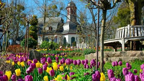 Auf dem Herzenberg in Hadamar blühen derzeit gut 10 000 Tulpen. Der prachtvolle Anblick erfreut die Besucher.  Foto: Kerstin Kaminsky