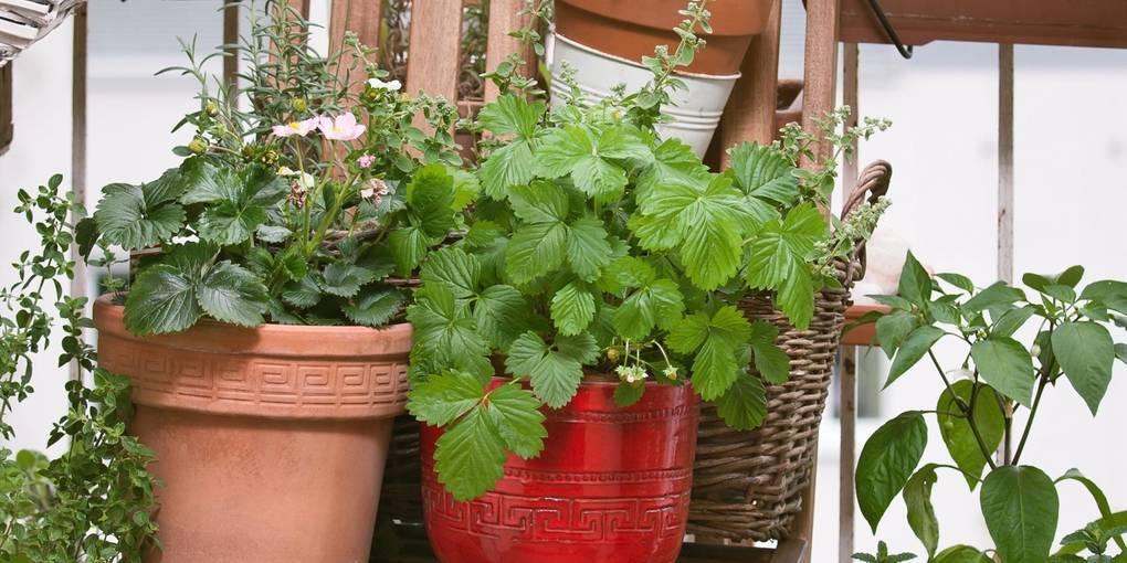 Mini-Garten auf dem Balkon: So geht´s