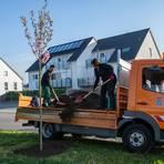 Thomas Montano und Manolya Capraz (von links) von der Garten- und Landschaftsbaugruppe des Nauheimer Bauhofs pflanzen neue Bäume im Ortsgebiet. Foto: Gemeinde