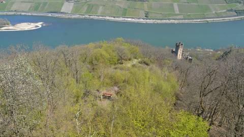 Der Wald über Burg Sooneck ist wegen der Hanglage ohnehin nur schwer zu bewirtschaften. Foto: Jochen Werner