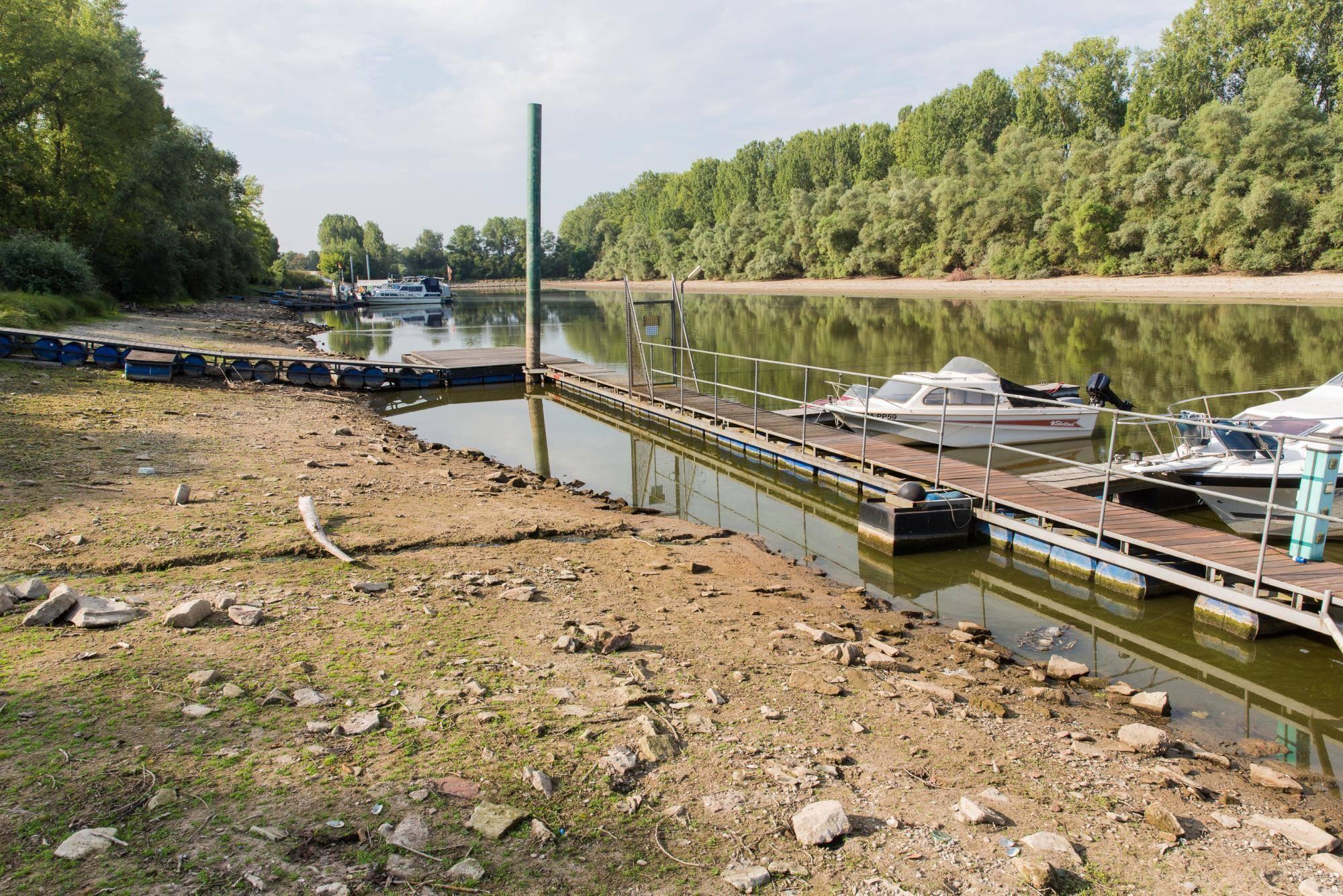 Hitze Macht Fischen Im Rhein Zu Schaffen