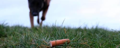 Keine Wurst aber eine mit Rasierklingen gespickte Frikadelle, hat ein Hundebesitzer in Kröffelbach gefunden. Symbolfoto: Christian Keller