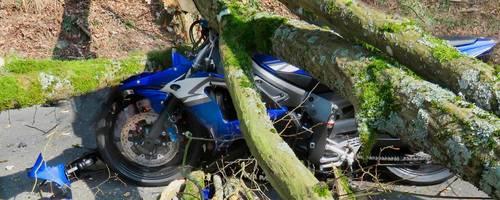 Ein Baum ist am 25. März 2018 auf die Weilstraße gefallen und hat einen Motorradfahrer schwer verletzt.  Archivfoto: Polizei