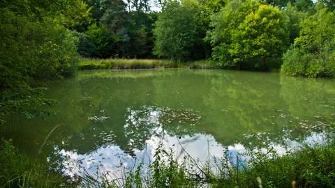 """Die """"Lettkaut"""" bei Spabrücken, einer der wichtigsten Lebensräume für seltene Kröten. Um solche Biotope zu pflegen, ist der Kreis bisher auf Gelder vom Land angewiesen. Eine Stiftung des Kreises soll nun diesen Umweg vermeiden. Foto: Wolfgang Bartels"""