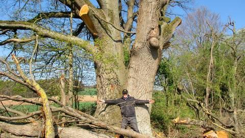 Wie die Axt im Walde: Mit ausgebreiteten Armen stellt sich Norbert Bandur vor die stark verstümmelte Eiche und zeigt im Größenvergleich, wie dick deren Stamm ist.  Foto: Norbert Bandur