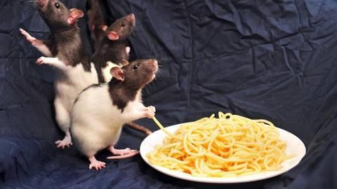 Appetit und Bewegungsdrang sind groß. Rumba, Salsa und Cha-Cha (v.l.) geht es einen Monat nach dem Transport blendend. Foto: Schmidt   Foto: Schmidt