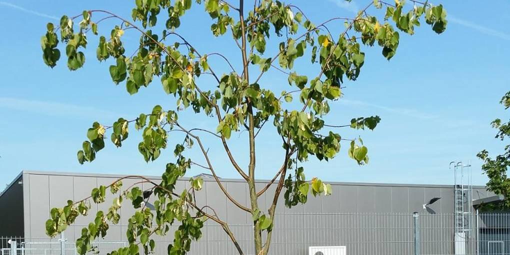 Junge Bäume Ausreichend Bewässern