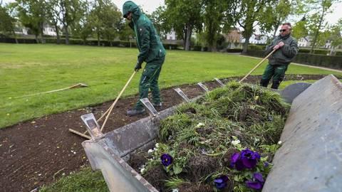 Viel zu tun haben derzeit die Mitarbeiter des Gartenbauamts in der Orangerie. Der Boden wird ausgebessert und die Frühjahrsblüher weichen den Sommerpflanzen. Foto: Guido Schiek