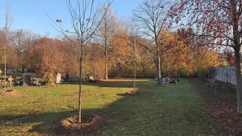 Auf dem Ebersheimer Friedhof wurden 14 neue Bäume gepflanzt. Foto: Jan Paaz