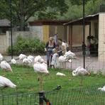 Flamingos im Darmstädter Vivarium. Foto: Bastian Thüne
