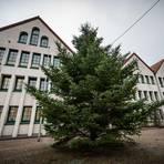 Der Weihnachtsbaum vor dem Rathaus in Fürth wird noch geschmückt und verbreitet vom ersten Advent an Lichterglanz. Foto: Sascha Lotz