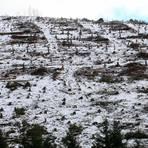 Kahlschlag: Baumstümpfe markieren im oberen Dietzhölztal, wo bis zum Sommer noch Fichten den Hang bewaldet haben. Foto: Frank Rademacher