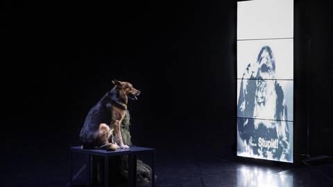 """Versteht der Schäferhund die Botschaft des Gorillas? Szene aus dem Tanzstück """"Hollow Bones"""". Foto: Dominik Mentzos"""