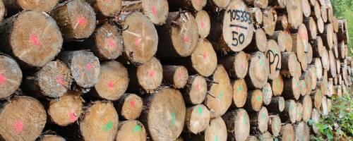 Auch im Lahn-Dill-Kreis und im Landkreis Gießen nehmen die Pläne zur Holzvermarktung langsam Gestalt an. Foto: Martin H. Heller