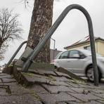 Das Wurzelwerk der Bäume hat die Pflastersteine auf dem Gehweg in der Frankensteinstraße angehoben. Foto: Thorsten Gutschalk