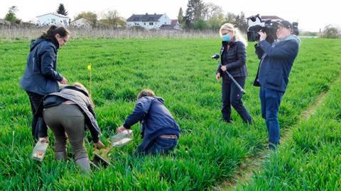 Das Team des Hessischen Rundfunks filmte in Langgöns die Arbeit der Feldhamsterschützer. Foto: Rieger