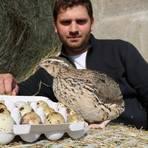 Klein und fein: Sven Schüttler verkauft Wachteleier vom eigenen Hof. Foto: Kirsten Sundermann
