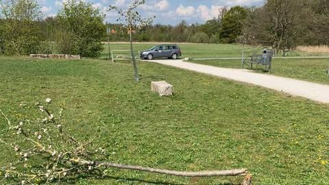 Unbekannte haben einen Apfelbaum am Bolzplatz im Blauen See in Königstädten abgebrochen.  Foto: Städteservice Raunheim Rüsselsheim AÖR