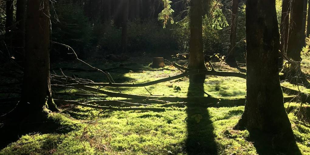 In der Stille des Waldes beerdigt werden: Friedwälder sollen diesen Wunsch erfüllen.   Foto: Jenny Berns