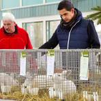 Wilfried und Christian Fröhlich (von links) züchten selbst und schauen sich mit Interesse die Tiere der Kollegen an.Foto: Ulrike Bernauer  Foto: Ulrike Bernauer
