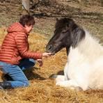 Regina Hillesheim mit Hatt, der Mutter des toten Fohlens, das offenbar von einem Raubtier gefressen wurde.  Foto: Nadine Weigel