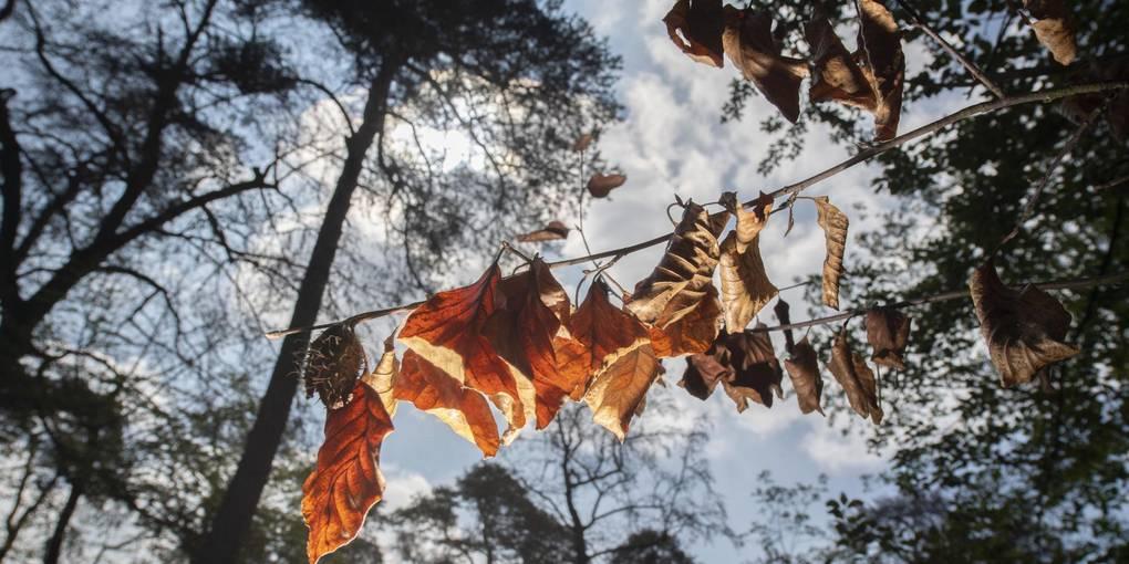 Der deutsche Wald ändert sein Gesicht_Allgemeine Zeitung