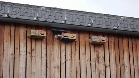 Die Nisthilfen wurden bunt gemalt und sind dauerhaft am Schulgebäude installiert. Foto: Stadt Mainz