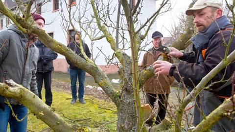 Baume Schneiden Aber Wie