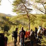 Nationalpark-Ranger  führen Wandergruppen auf dem Urwaldsteig Edersee durch die weiten Buchenwälder im Nationalpark Kellerwald. Foto: Sven Hollerich  Foto: Sven Hollerich