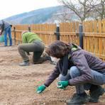 Auflesen: Bevor gepflanzt oder gesät wird, müssen die Beete vorbereitet werden. Steine haben da nichts verloren. Foto: Frank Rademacher