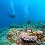 Taucher im Korallengarten im Golf von Akaba. Foto: Marc Vorsatz