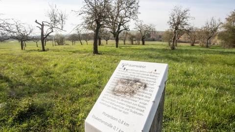 Die Bildhauerwiese in Massenheim wird ihrem Namen nicht mehr gerecht. Deshalb wird sie umgewidmet zur Streuobstwiese. Foto: Vollformat/Volker Dziemballa