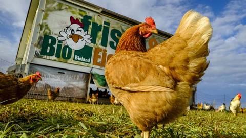 Der Markt für Bio-Lebensmittel ist zuletzt stark gewachsen. Die Ökomodellregion Süd will Bauern in Südhessen zur Umstellung ihrer Bewirtschaftung ermutigen. Archivfoto: Sascha Kopp